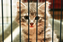 10036 Cat in a Cage