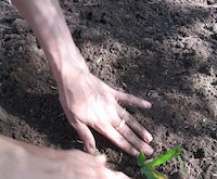 10864 gardening
