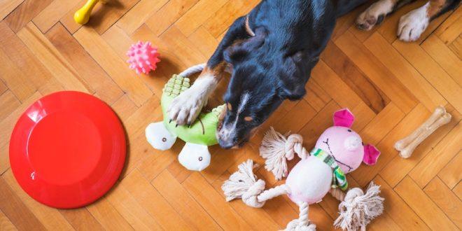 dog entertainment tips