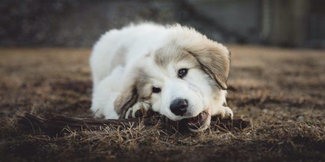 Dog isolation joke