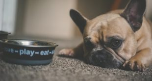 Finding a healthy dog diet