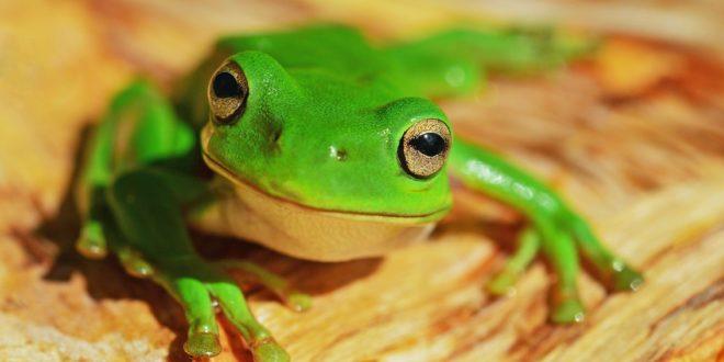 Frog_Joke_GrownUps