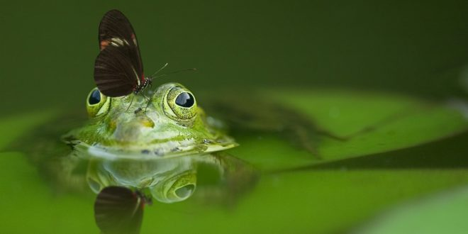 Happy frog joke