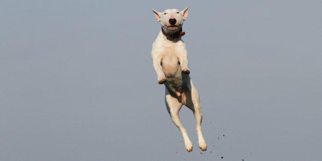 Jumping dog joke