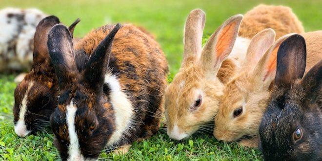 Rabbit parade joke