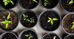Seed sowing tips