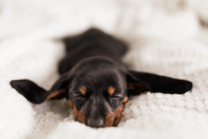 Things to think about when choosing a new dog