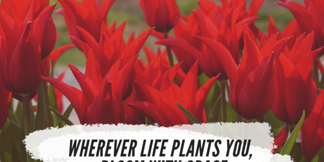 Where ever life plants you bloom with grace