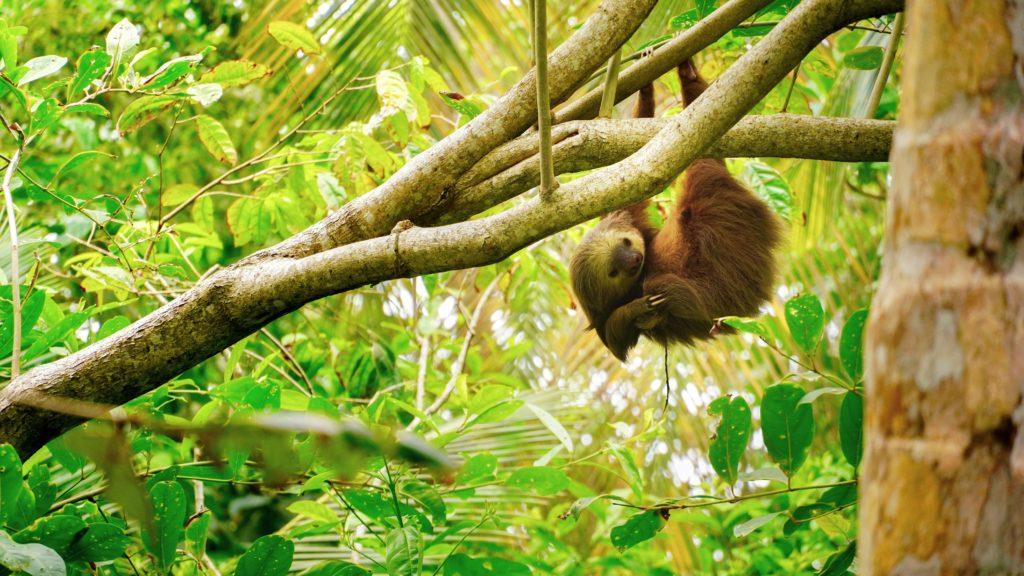 Costa Rica. Photo by Adrian Valverde.