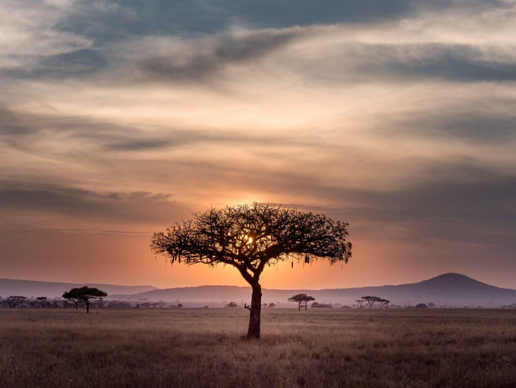 Tanzania. Photo by Hu Chen.